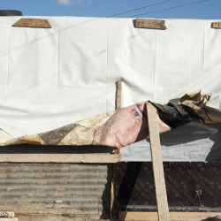 http://martabogdanska.com/files/gimgs/th-35_refugees35.jpg
